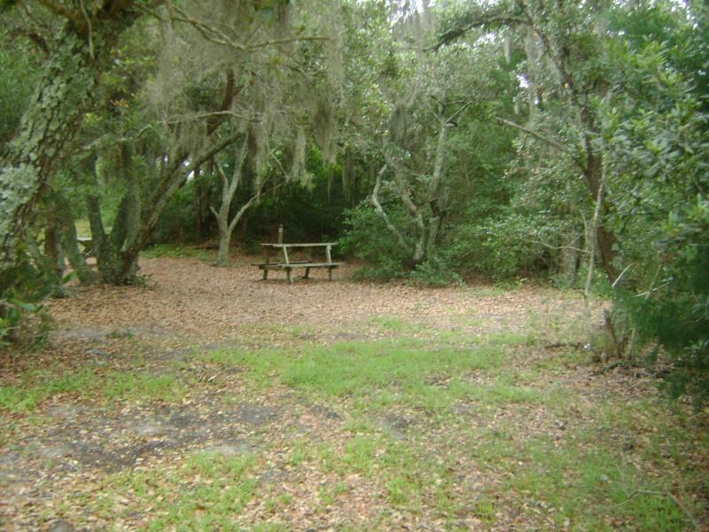 camping in the woods. Primitive Tent Site Camping In The Woods L